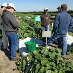 Breeders at vegetable research facility in South Florida.