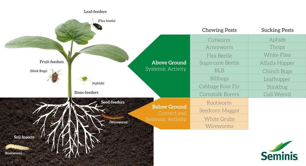 Seed-treatment-illustration