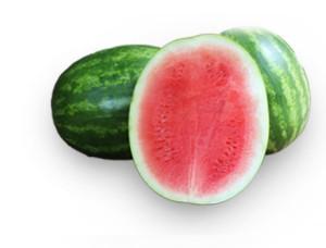 Seminis Watermelon Breedering Program: Jerome Bernier