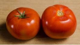 Tomato Figure 1