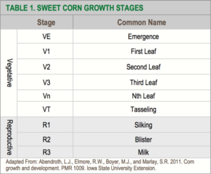 Table Of Sweet Corn Growth Stages