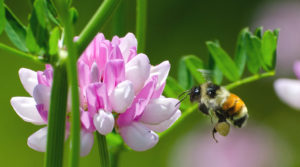 Image of bee pollinating flower
