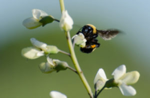 An Efficient Bee Focused On Pollination