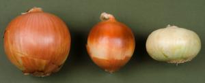Onion Bulbs Of Various Sizes