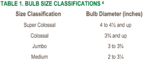 Onion Size Classification Table