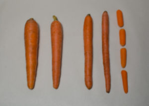 The Differences In Carrots Planted In Lesser Density And Higher Density Plantings